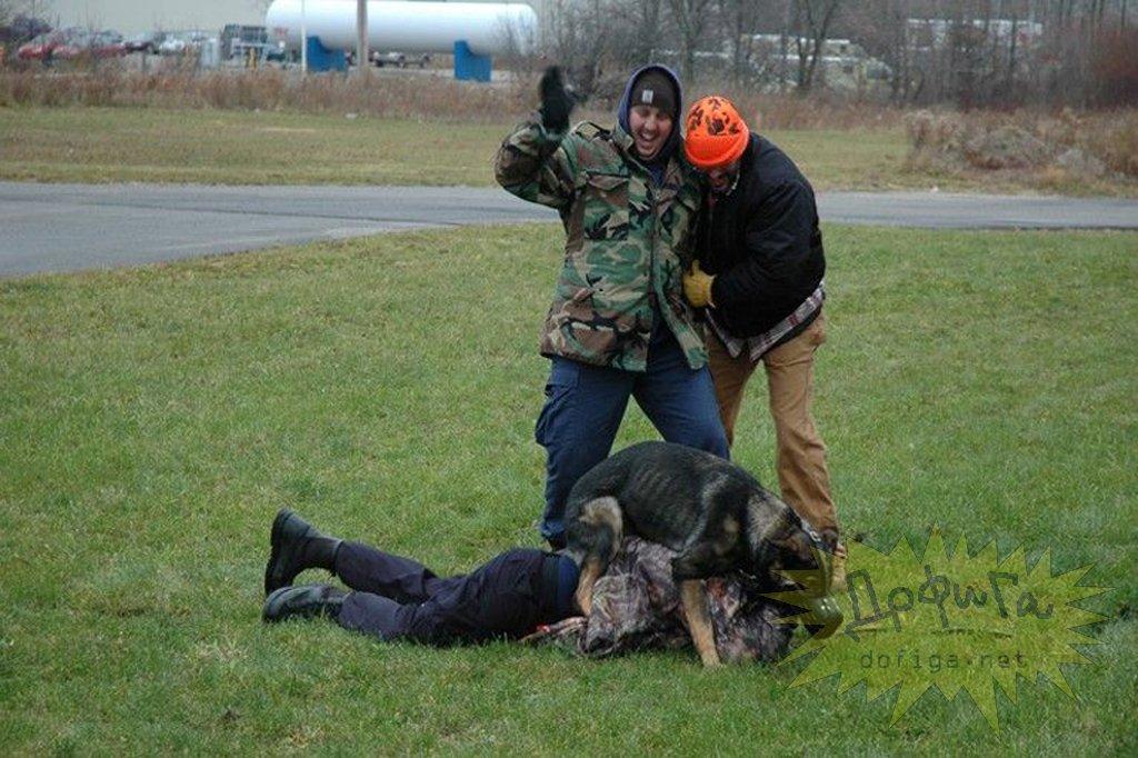 Эти собаки догоняют жертву, валят на землю и насилуют до смерти