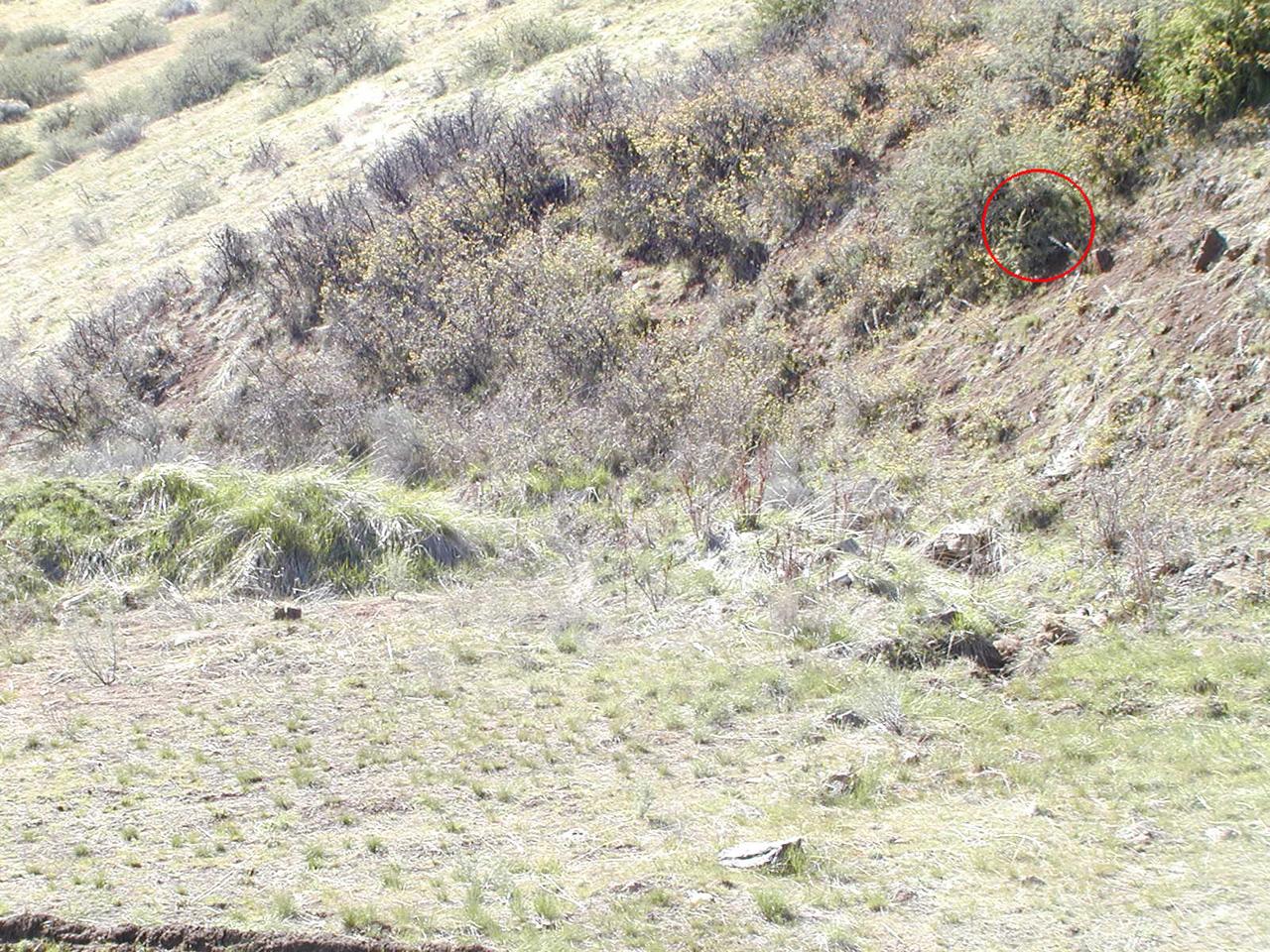 еще картинки где снайпер выкройка для начинающих